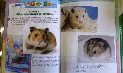 foto-moey-domashnie-minet-v-zelenograde-zakazat-telefoni